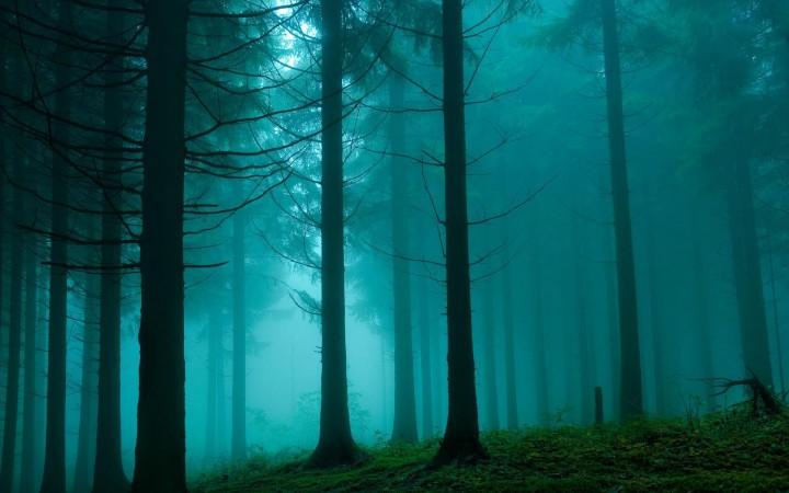 Forêt - Au milieu des arbres millénaires